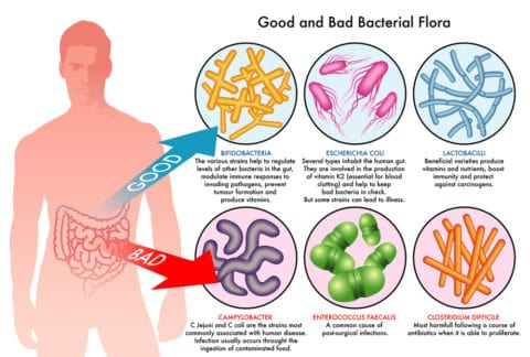 Gut and Hormones Connection - YouHolistic