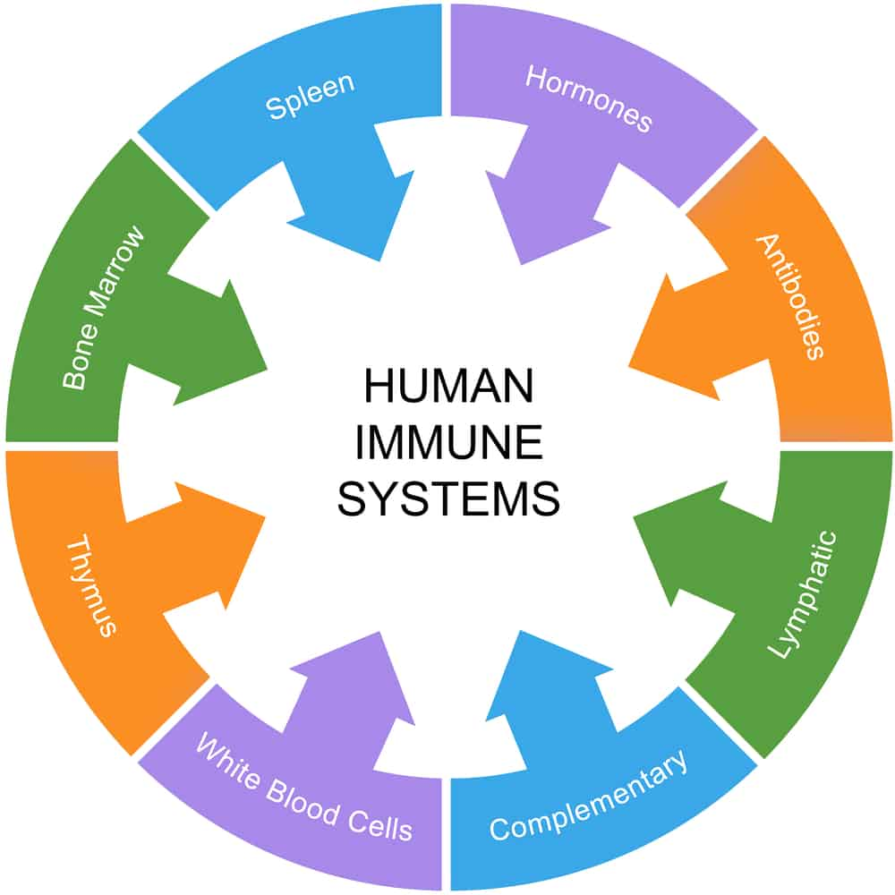 Immune Imbalance Services by YouHolistic